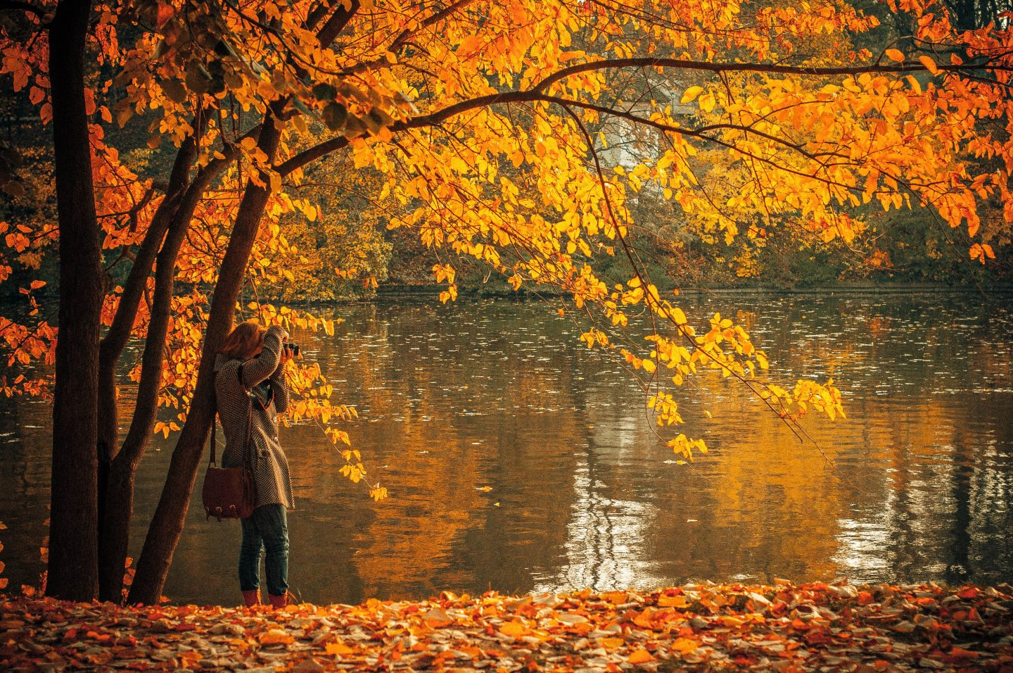 Best Places To Visit During The Fall Season