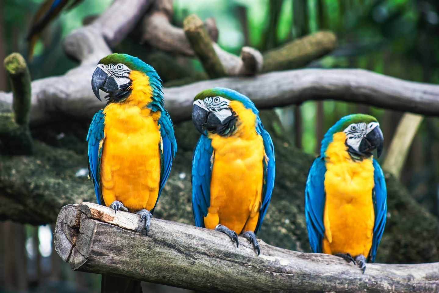 The Activities You Can Enjoy In Jurong Bird Park
